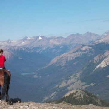 Office Job's on Horse Ranch in the Wilderness