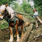 Horse Logging (4) (600 x 404)