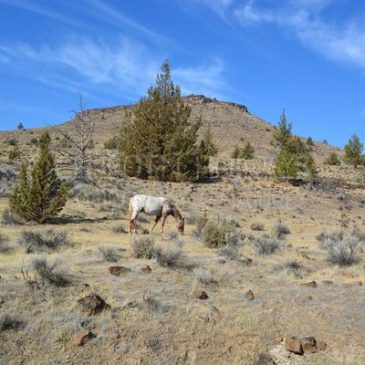To know I know nothing: my first encounter with wild horses that changed my perspective